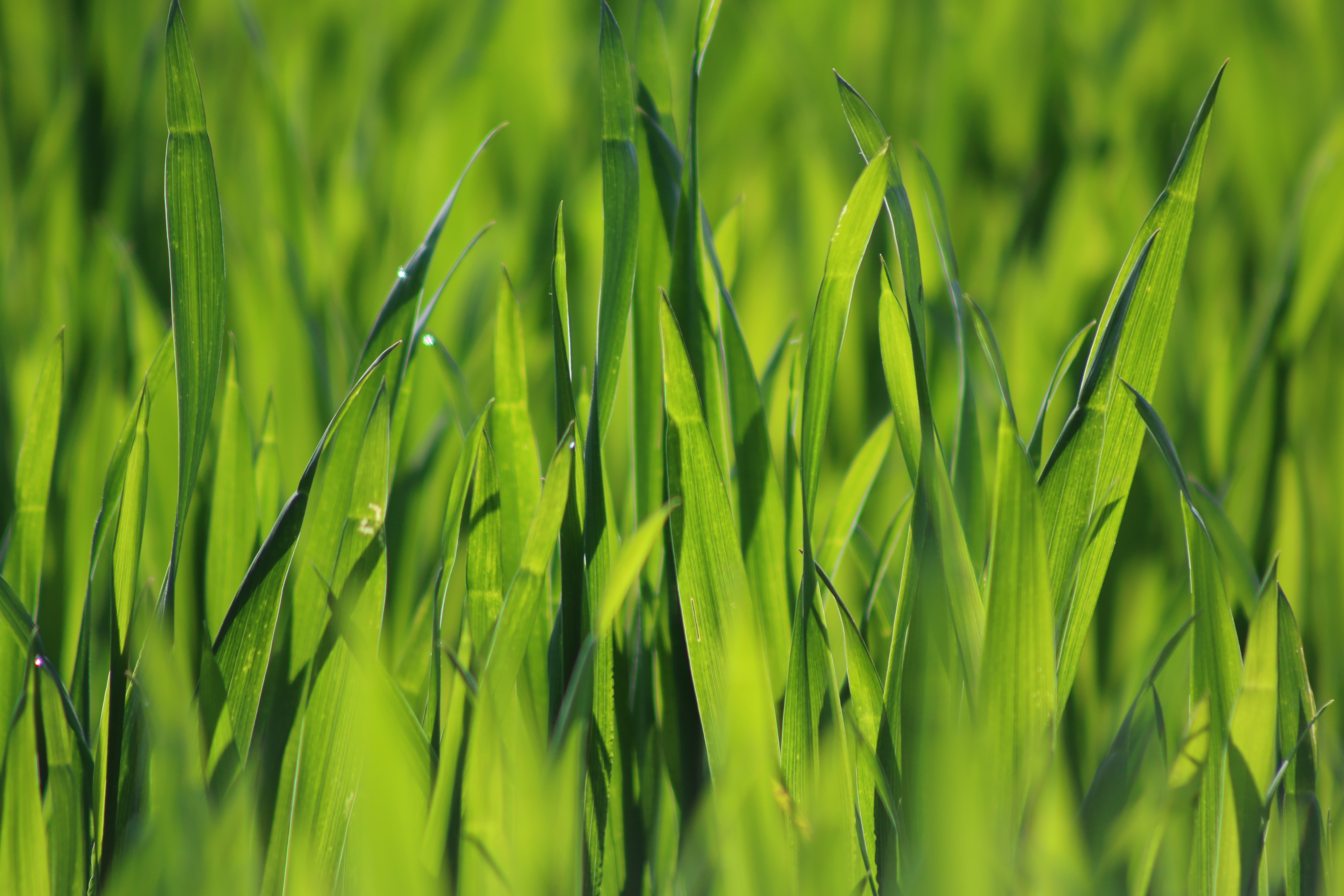 close up photo of blades of grass