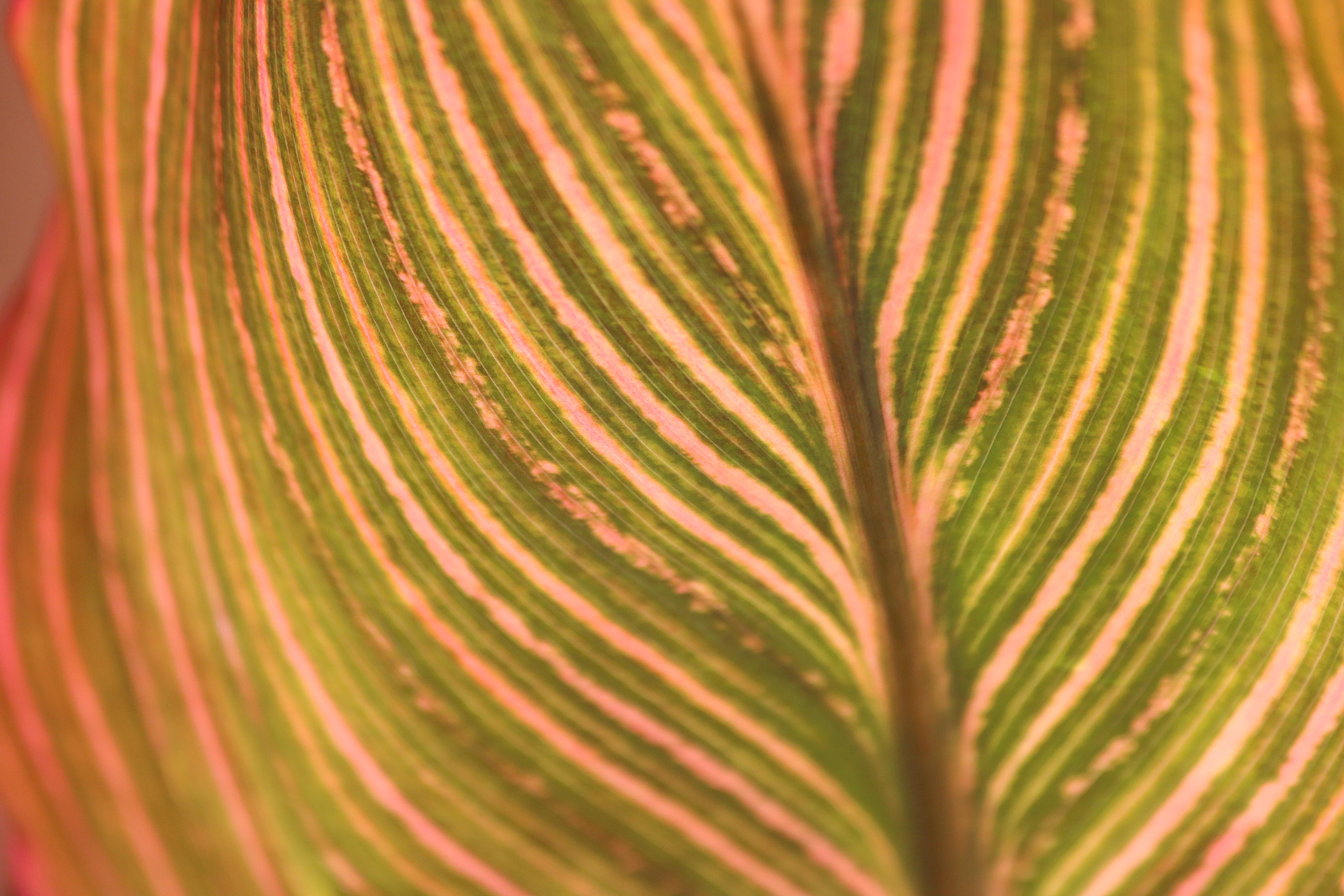 pattern of lines on a leaf