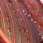 close-up of drops of rain
